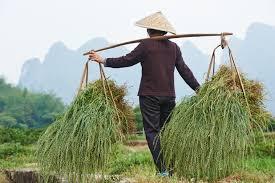 fxlogos-granjero-chino